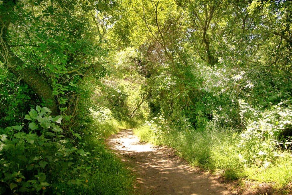 Andrew Molera State Park (1)