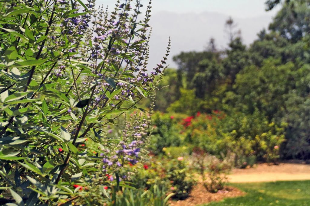 Visit the beautiful Descanso Gardens in Flintridge, Los Angeles