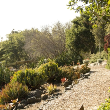 Explore one of SLO counties beautiful botanical gardens right off highway 1!