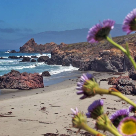 Explore one of BIg Sur's secret beaches that is also home to turkey vultures!