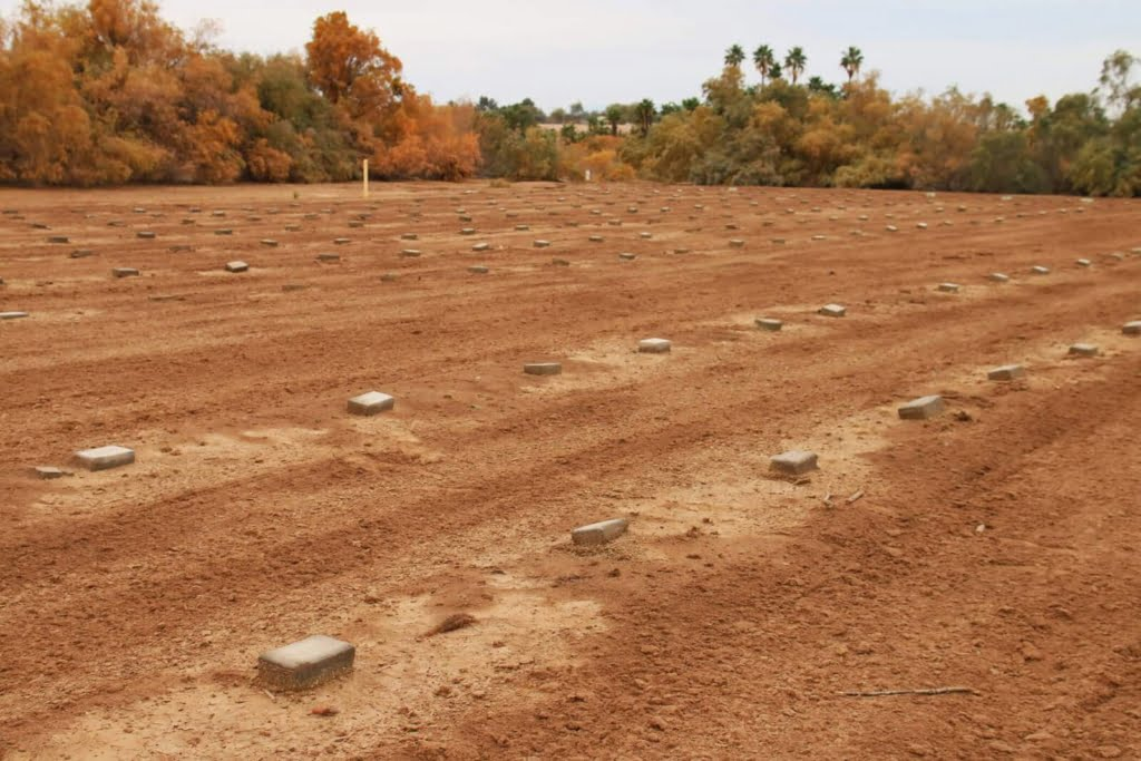 In a quiet field behind the Terrace Park Cemetery in Imperial Valley lays the remains of hundreds of unidentified bodies, all named Jane & John Doe.