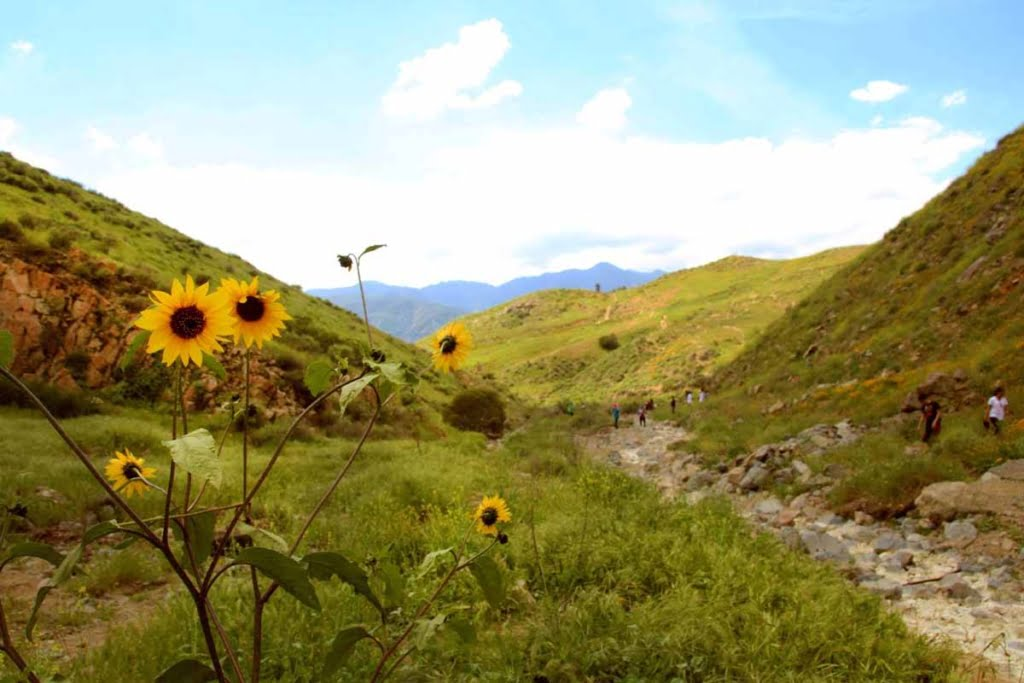 Hike Walker Canyon in Riverside County. This is one of Lake Elsinore's top trails for wildflowers and filled with colorful beauty in spring!