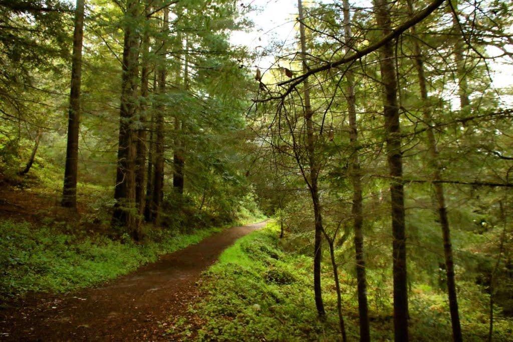 Byrne-Milliron Forest hidden california