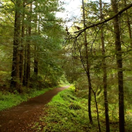 Hike the amongst the lush Santa Cruz redwoods in the Byrne-Milliron Forest. We saw newts and a ton of banana slugs during our hike!