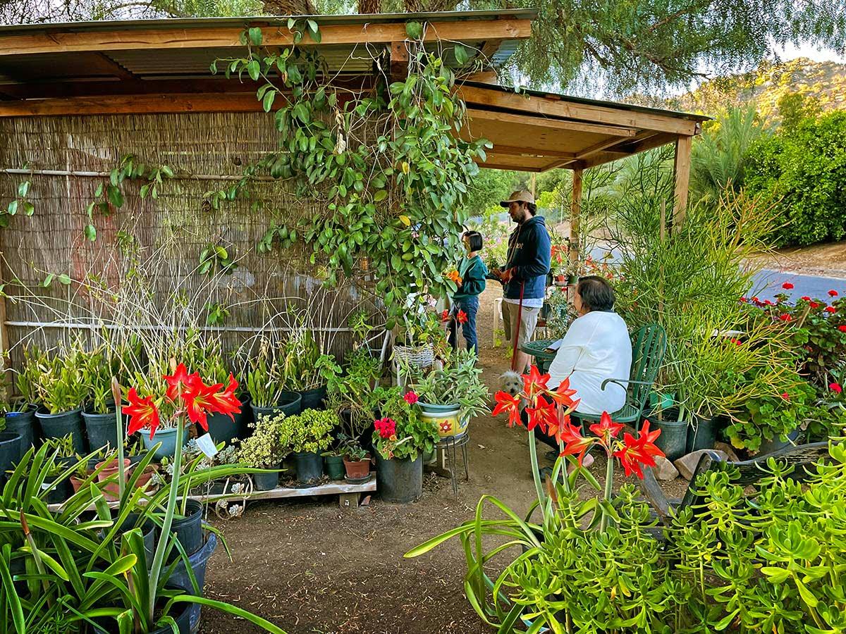 buena loma gardens