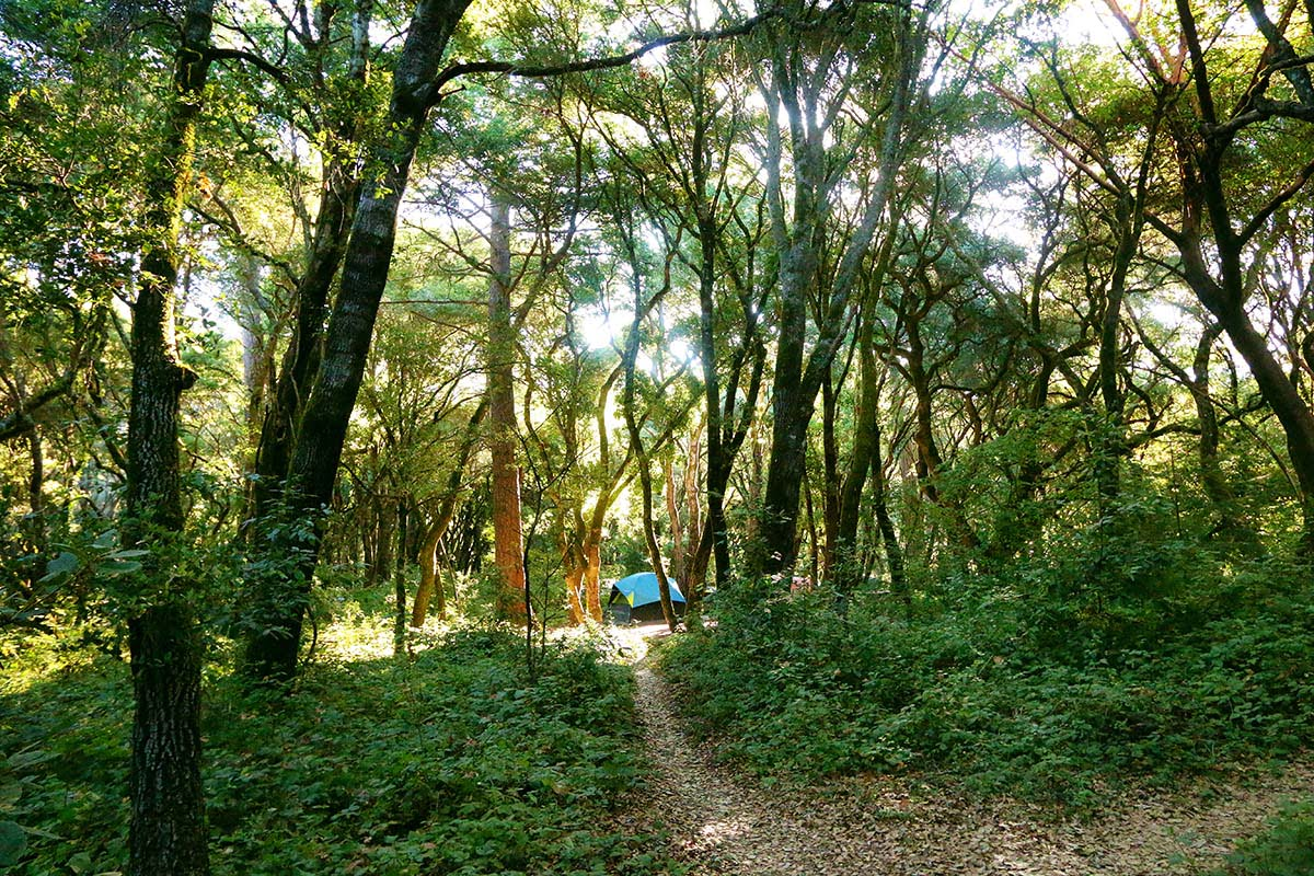 henry cowell observation deck (1)